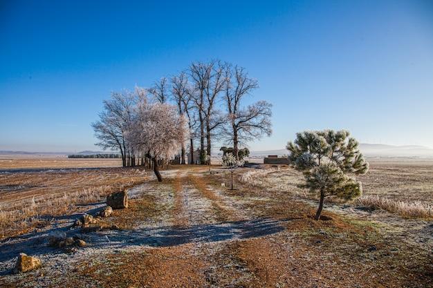 Winterlandschaft mit gefrorenen bäumen