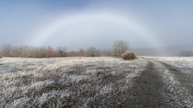 Winterlandschaft mit intensivem nebel und regenbogen am horizont, eis auf den pflanzen und auf der straße. nebelbogen. riaza, spanien.