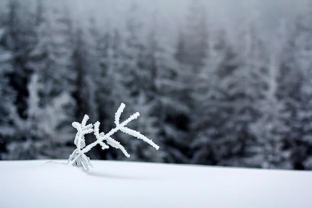Winterlandschaft mit schnee bedeckte kleine kiefer