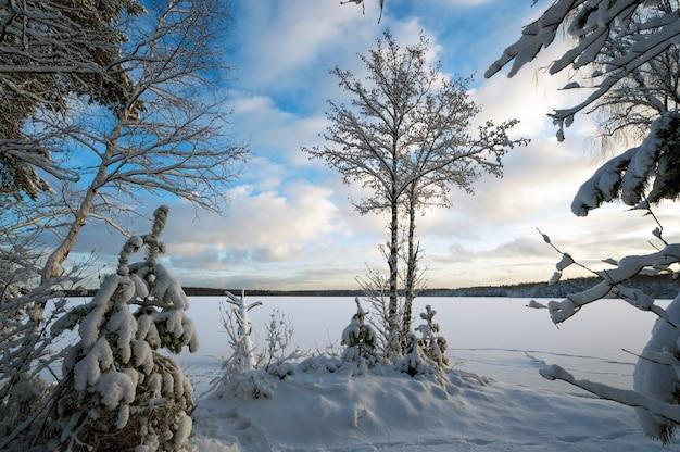 Winterlandschaft mit schneebedeckten bäumen am ufer eines zugefrorenen sees.
