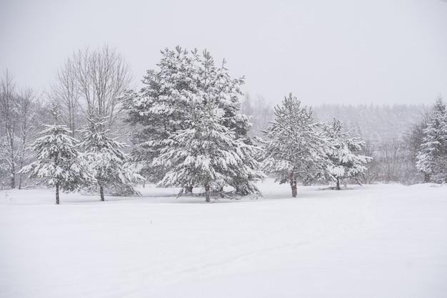 Winterlandschaft mit schneebedeckten bäumen und schneeflocken. weihnachtskonzept