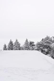 Winterlandschaft mit schneebedeckten bäumen