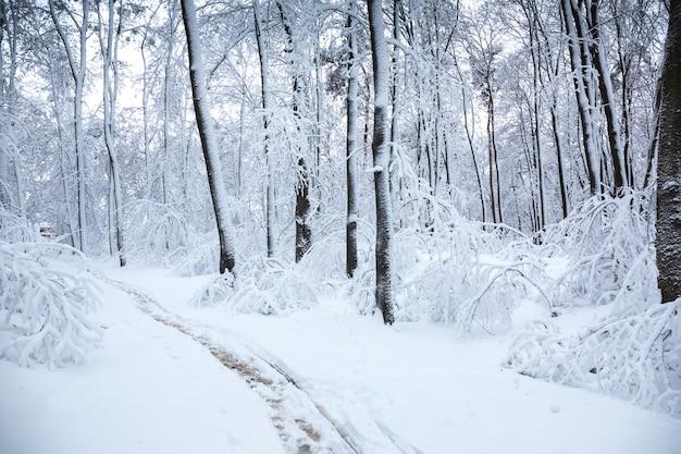 Winterlandschaft mit schneefall im park