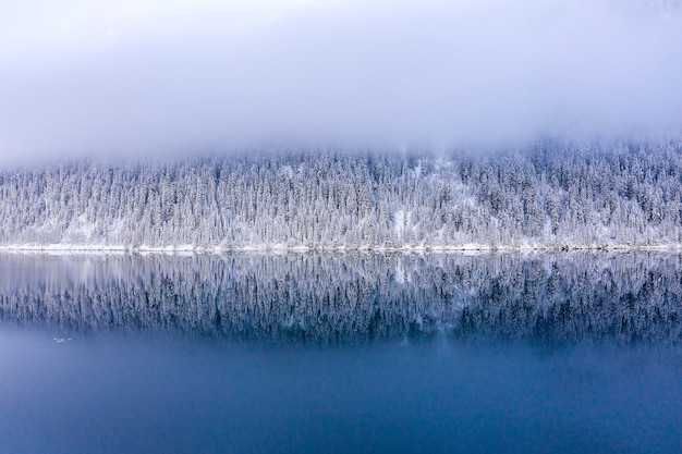 Winterlandschaft mit see umgeben von schneebedeckten bäumen am frühen morgen