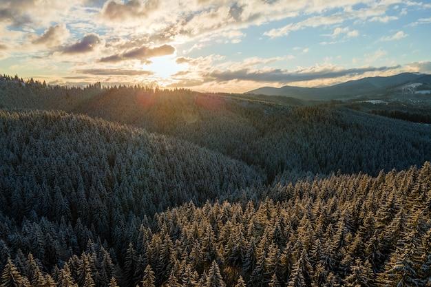 Winterlandschaft mit spruse-bäumen des schneebedeckten waldes in kalten bergen.