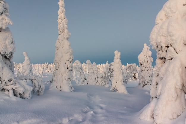 Winterlandschaft mit tykky schnee bedeckte bäume im winterwald.