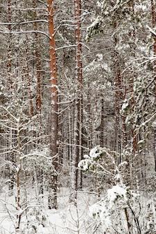 Winterlandschaft mit verschiedenen baumarten, bedeckt mit weißem schnee und frost in der wintersaison, einem frostigen tag nach einem schneefall