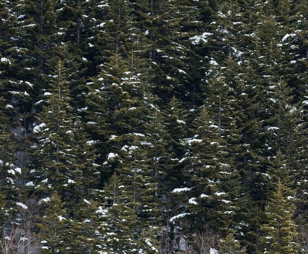 Winterlandschaft mit verschneitem wald hoch in den bergen an einem sonnigen tag.