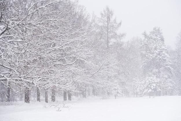 Winterlandschaft mit verschneiten bäumen und schneeflocken. weihnachtskonzept