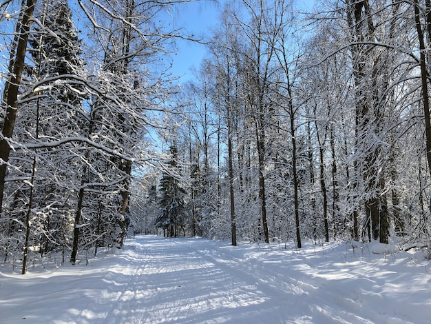 Winterlandschaft mit verschneiter straße durch den wald