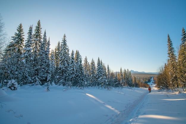 Winterlandschaft. schneebedeckte bäume und eine straße, die im winter bei sonnigem wetter in die ferne führt