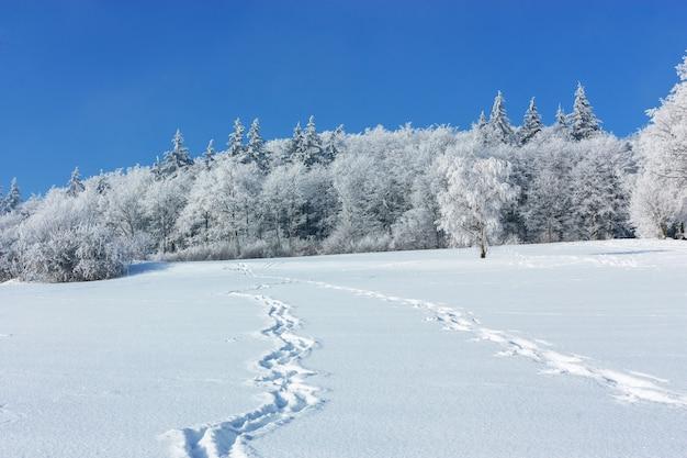 Winterlandschaft. spuren auf einem schneebedeckten feld führen an einem frostigen wintertag zum waldrand.