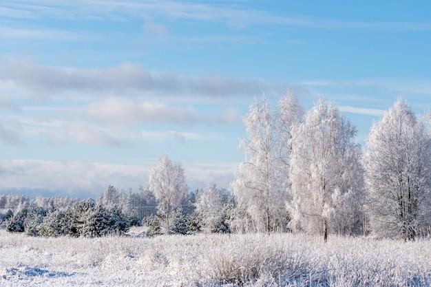 Winterlandschaft von bereiften bäumen gegen einen blauen himmel an einem sonnigen morgen