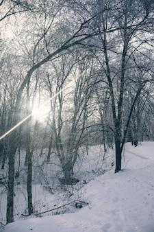 Winterlandschaft von schneebedeckten ästen gegen bunten himmel