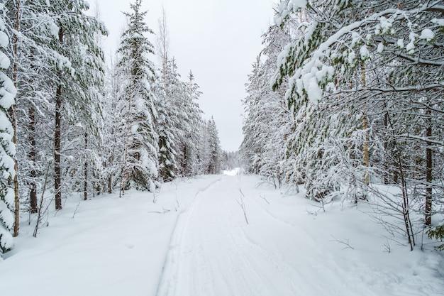 Winterlandschaft. winterstraße durch einen schneebedeckten wald