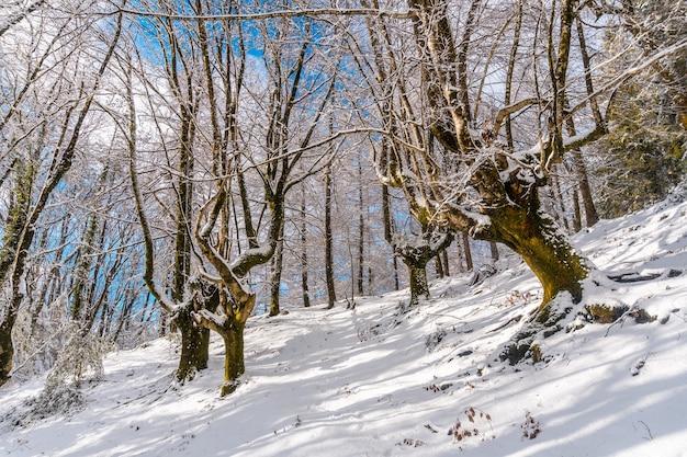 Winterlandschaften im verschneiten buchenwald im naturpark artikutza in oiartzun