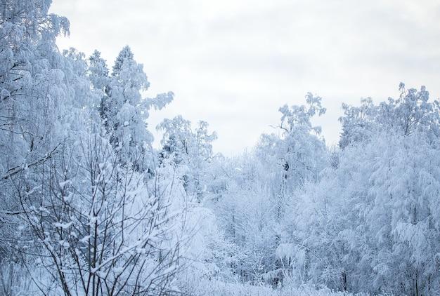 Winterlandschaftsbäume im schnee