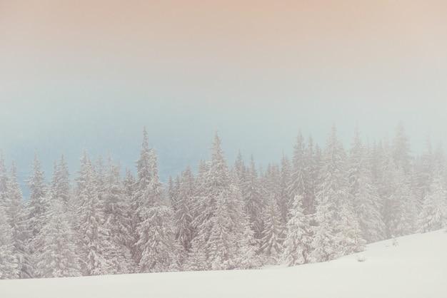 Winterlandschaftsbäume in frost und nebel
