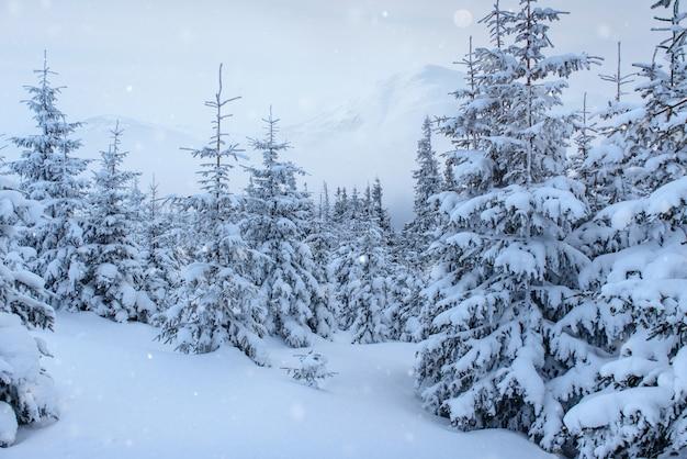 Winterlandschaftsbäume und zaun im raureif, hintergrund mit einigen weichen höhepunkten und schneeflocken