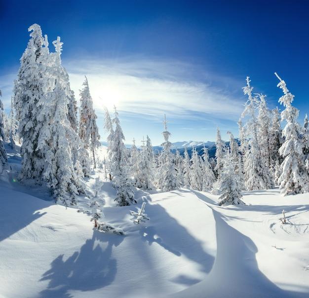 Winterlandschaftsbäume verschneit