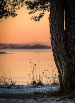 Winterlandschaftsrosa-morgenlichtozean durch kiefer