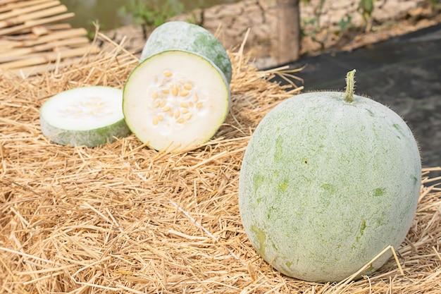 Wintermelone wird auf dem stroh in stücke geschnitten.
