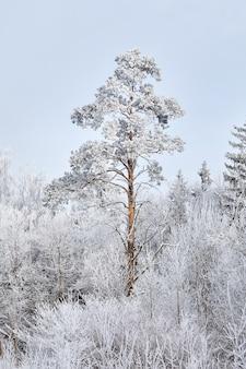 Wintermischwald. bäume mit weißem schnee bedeckt