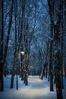 Winternachtlandschaft - bank unter winterbäumen und leuchtenden straßenlaternen mit fallenden schneeflocken