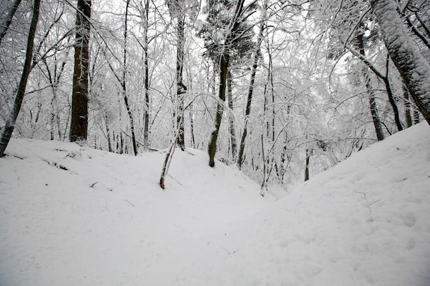 Winterpark mit bäumen ohne laub