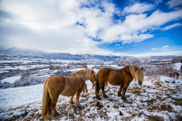 Winterpferde auf einem berg