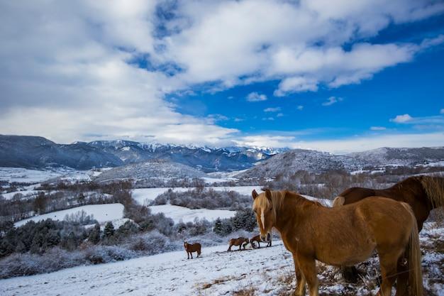 Winterpferde in la cerdanya, pyrenäen, spanien