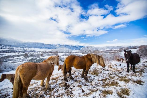 Winterpferde in la cerdanya pyrenäen spanien