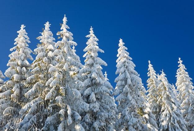 Winterreif und schneebedeckte bäume auf blauem himmelshintergrund