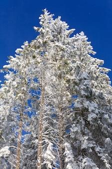 Winterreif und schneebedeckte baumkronen auf blauem himmel mit etwas schneefall hintergrund