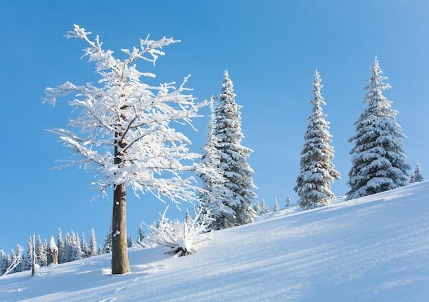 Winterreif und schneebedeckte tannenbäume am berghang auf blauem himmelshintergrund