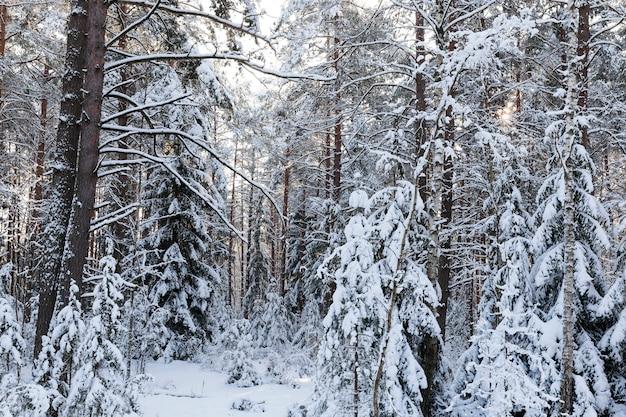Wintersaison, natur nach einem schneefall in einem kalten, frostigen winter, osteuropa