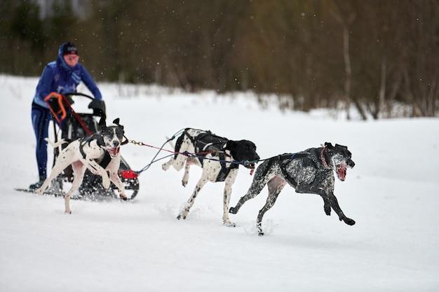 Winterschlittenhunde, die in den bergen rennen