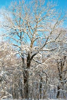Winterschneewald mit bäumen im schnee