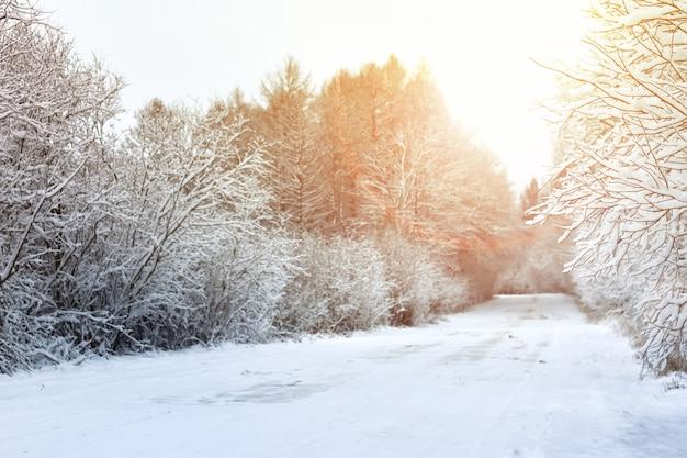 Winterstraße im wald