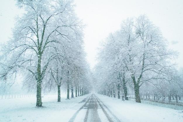 Winterstraße zu den unbekannten schneebedeckten bäumen