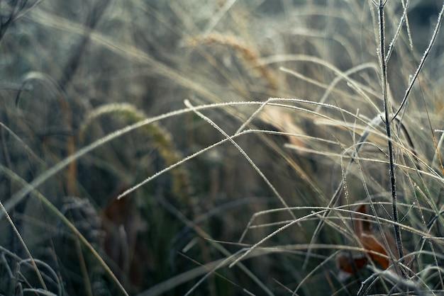 Winterszene aus gefrorenem gras,