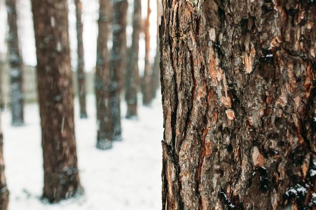 Wintertag. die rinde des baumes inmitten eines waldes von bäumen im schnee