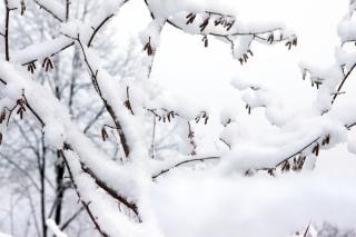 Winterwald, flora