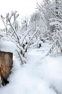 Winterwald, holz