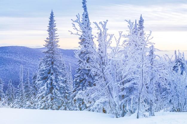Winterwald in den bergen bei dem sonnenuntergang. reisen winter hintergrund.