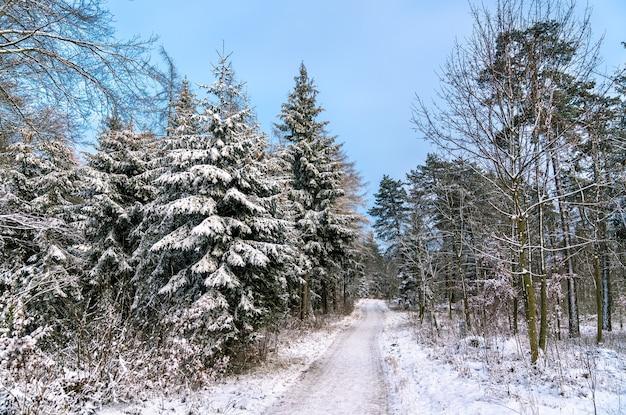 Winterwald in den schwäbischen alpen, deutschland