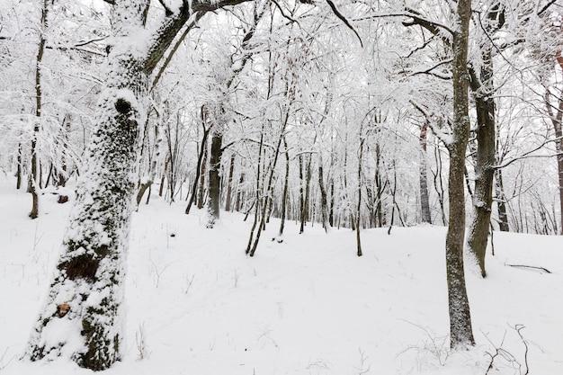 Winterwald mit bäumen ohne laub