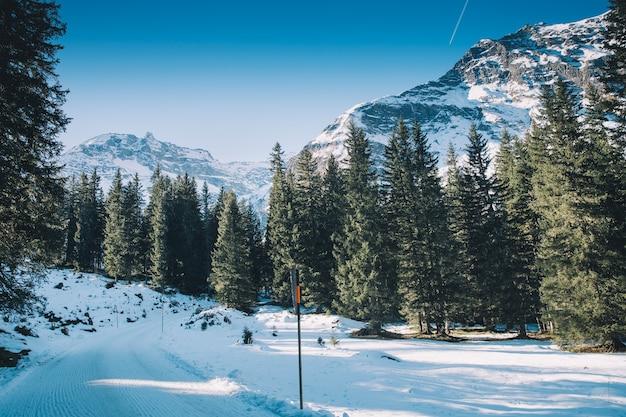 Winterwald mit bergen der alpen im hintergrund, österreich, europa