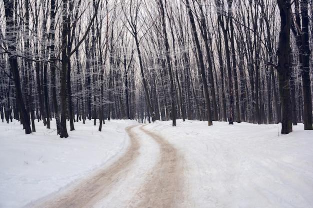 Winterwald mit dem von raureif bedeckten fußweg