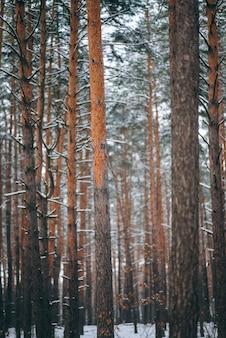 Winterwald mit schnee auf bäumen und boden